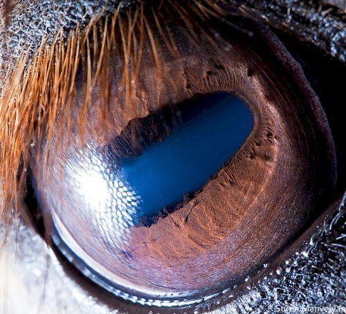 Как выглядят глаза разных животных
