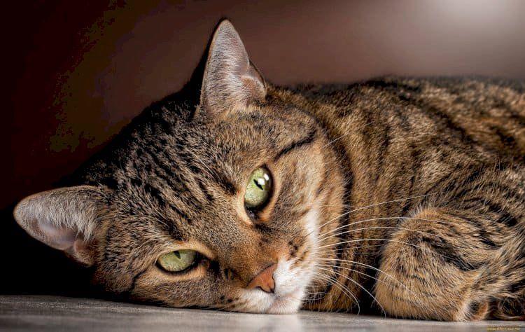 5 фактов о кошках