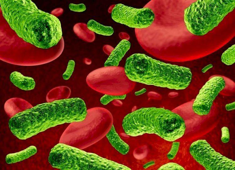 Антибиотикорезистентность - почему человечество может проиграть смертельную битву с бактериями?
