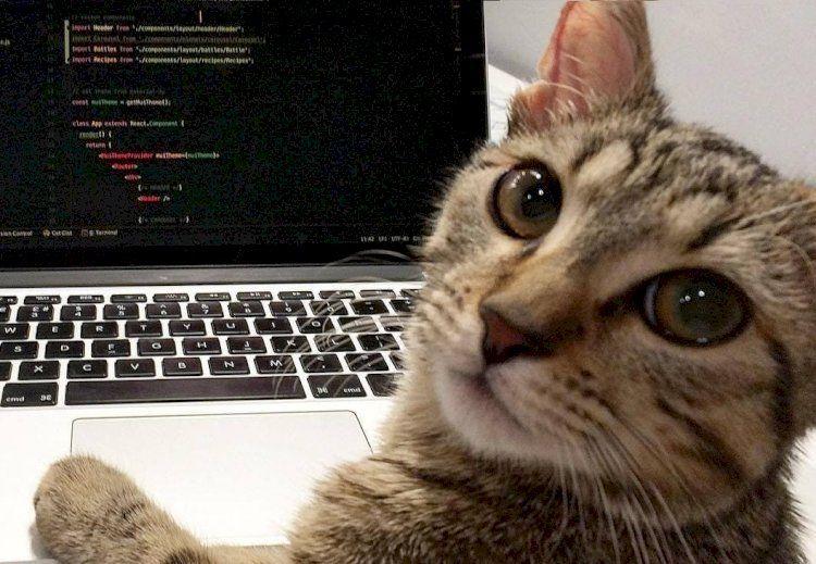 Коты, которые не стали сидеть на шее хозяев и устроились на работу