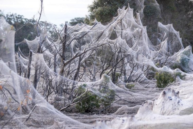 Австралия в паутине